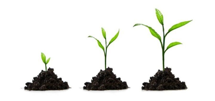 La croissance requiert plus que jamais soin et attention